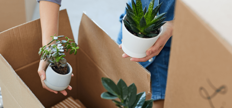 How to Pack Your Plants and Prepare for The Move?